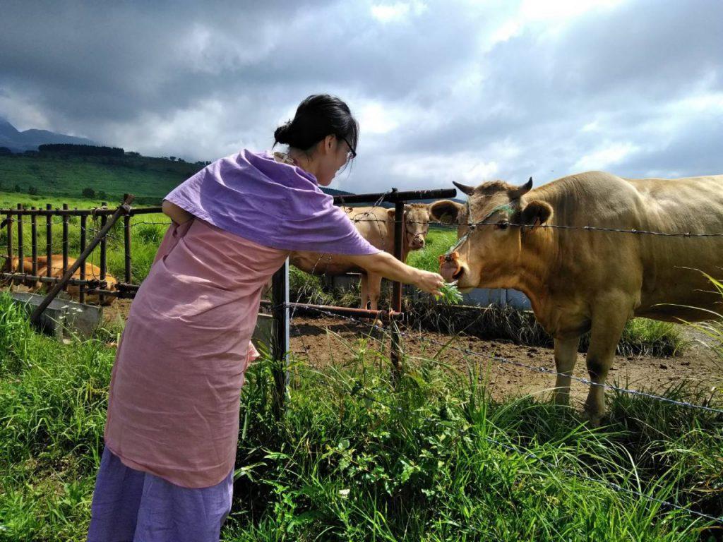 牛さんに草をあげる少女