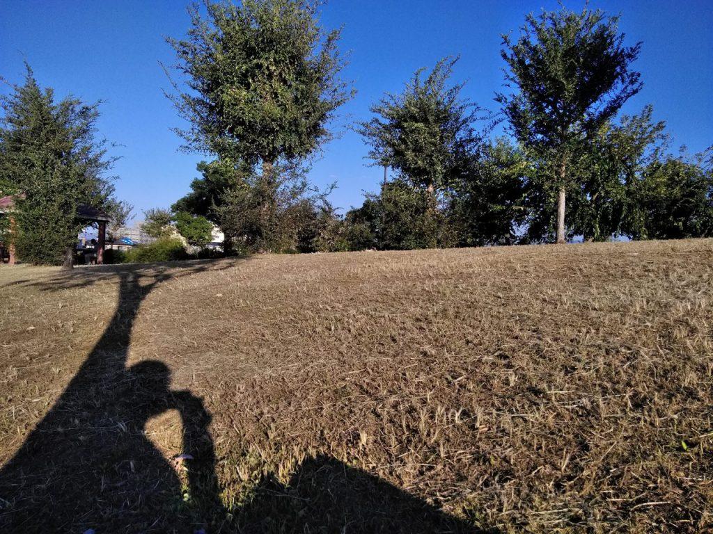 芝生の上でアーシング