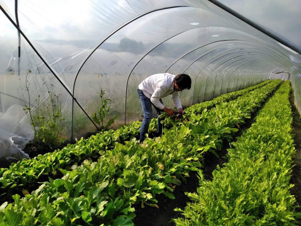 自然農苑の橋本さん
