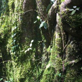 共生する植物のチカラ